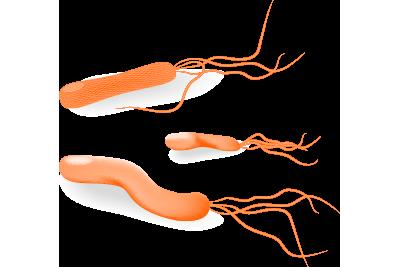 ピロリ菌外来について